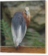 Javan Pond Heron At Zoo Berlin Wood Print