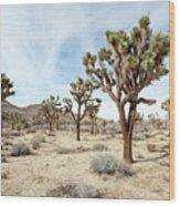 Joshua Tree National Park, California Wood Print