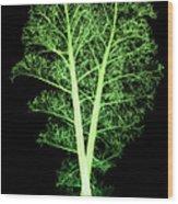 Kale, Brassica Oleracea, X-ray Wood Print