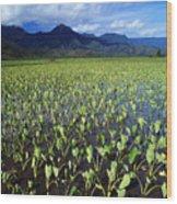 Kauai, Wet Taro Farm Wood Print