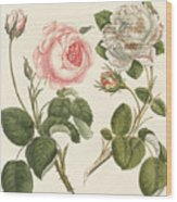 Kinds Of Roses Wood Print