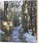 King Billy Forest Cradle Mountain Wood Print