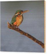 Kingfisher Wood Print