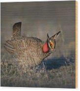 Lesser Prairie Chicken Wood Print