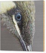 Lewins Honeyeater Wood Print