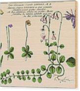 Linnaea Borealis, Linnaeuss Favorite Wood Print