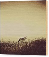 Lone Wolf Wood Print