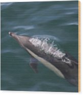 Long-beaked Common Dolphins In Monterey Bay 2015 Wood Print