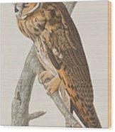 Long-eared Owl Wood Print