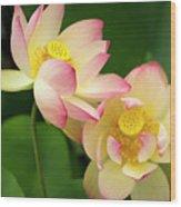 Lotus Blossom Wood Print
