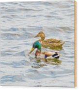 Male And Female Ducks Wood Print
