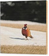 Male Ring-necked Pheasant Wood Print