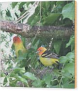 2 Male Western Tanagers Wood Print
