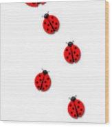 Many Ladybugs Wood Print
