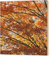 Maple Tree Foliage Wood Print