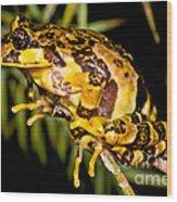 Marbled Wood Frog Wood Print