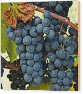 Marechal Foch Grapes Wood Print