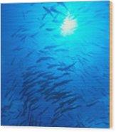 Micronesia Marine Life Wood Print