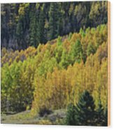 Million Dollar Highway Aspens Wood Print