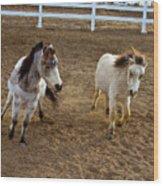 Miniature Horse Wood Print