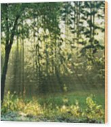 Morning Light Wood Print