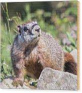 Mr. Marmot Wood Print