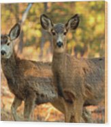 Mule Deer In The Woods Wood Print