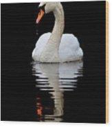 Mute Swan Wood Print