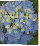 My Blue Hydrangeas Wood Print