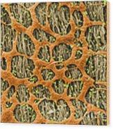 Myenteric Plexus, Sem Wood Print