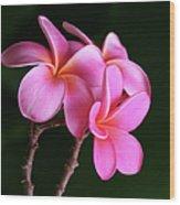 Na Lei Pua Melia Aloha He Ala Nei E Puia Mai Nei Pink Plumeria Wood Print