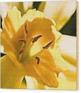 10553 Narcissus Superstar - Flower 080  Wood Print