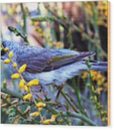 Noisy Miner In Oz Wood Print