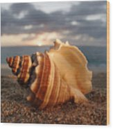 North Shore Seashell Wood Print