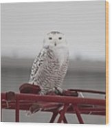 Snowy Owl 9470 Wood Print