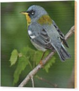 Northern Parula Wood Print