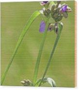 Ohio Spiderwort Wood Print
