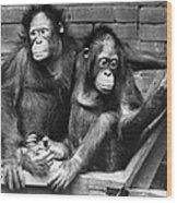 Orangutans Wood Print