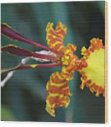 Orchid Expression 3892 Wood Print