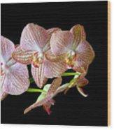 Orchid Phalaenopsis Flower Wood Print