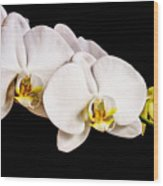 Orchid Wood Print