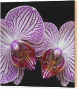 2 Orchids Wood Print