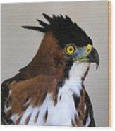 Ornate Hawk-eagle Wood Print