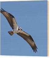 Osprey Wood Print