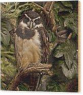 Owl Wood Print