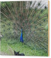 2 Peacocks And A Black Pussy Cat Wood Print