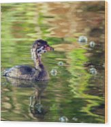 Pied-billed Grebe Bubbles Wood Print