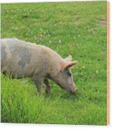 Pig In A Pasture Wood Print