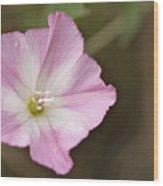 Pink Wildflower Wood Print
