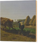 Cattle At Rest On A Hillside In The Alps Wood Print